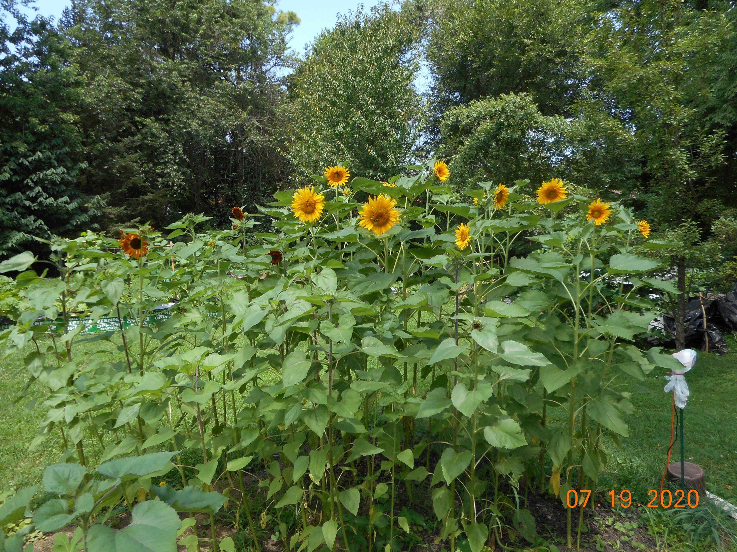 Post G21-001:  Garden lessons learned.