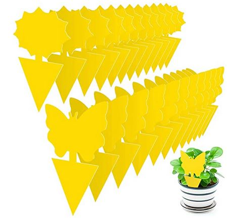 Post #G21-028:  Bee-proof yellow sticky traps